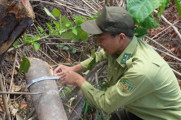Khánh Hoà yêu cầu xử lý trách nhiệm cá nhân trong vụ phá rừng ở xã Suối Tân