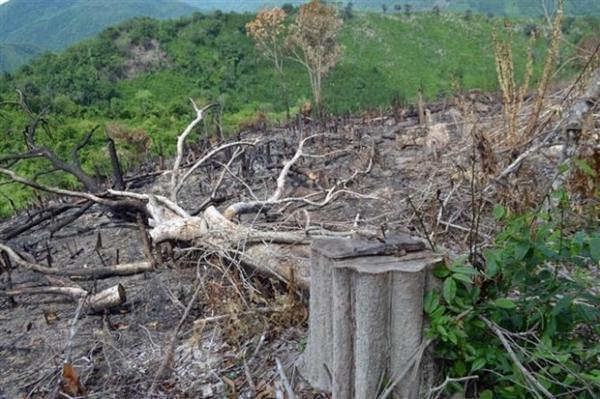 Khởi tố 5 cán bộ liên quan vụ phá rừng ở Phú Yên