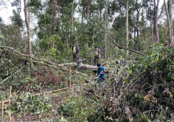 Phá rừng phòng hộ để lấy đất sản xuất các đối tượng bị phạt hơn 1,5 tỷ đồng